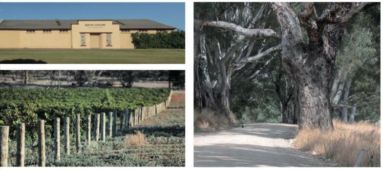 伯顿酒庄-澳大利亚葡萄酒性价比和高品质的完美结合