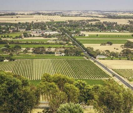 澳洲巴罗莎山谷葡萄采摘量创新低,高端葡萄酒面临限制供应