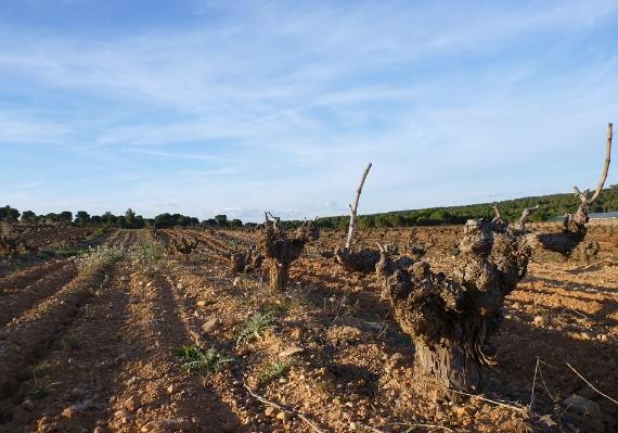 关于西班牙葡萄酒你需要知道的