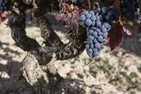选择多样性的西班牙葡萄酒,中国餐桌+进口商凭这些理由一起赞成!