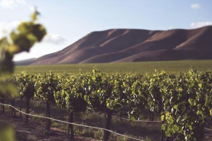 美弗吉尼亚州即将迎来独具特色的金秋葡萄酒月