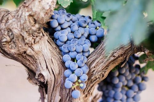 以色列打造葡萄酒与其走向国际化之路