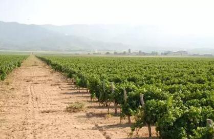 为什么马其顿葡萄酒备受经销商和消费者的青睐?