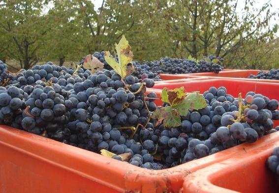 意大利葡萄酒的历史