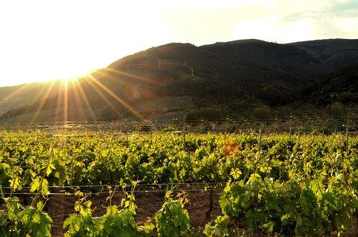 大家知道西班牙的丹魄葡萄酒吗?有没有品尝过吗?