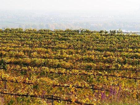 大家有去过波尔多葡萄酒产区旅游过吗?
