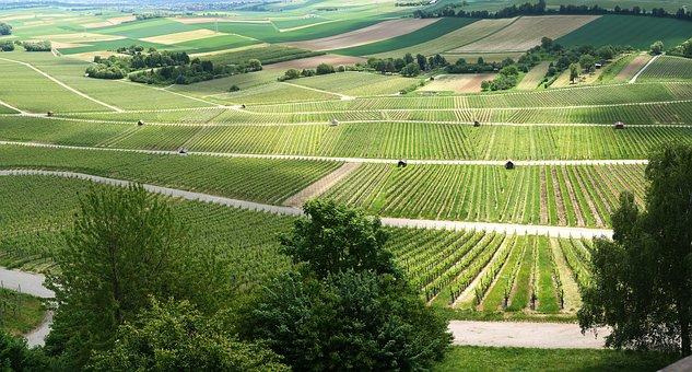 关于法国的葡萄酒历史文化,大家有去深入了解过吗?