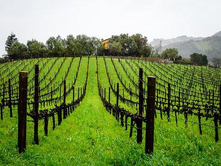 大家有没有去深入了解过阿根廷葡萄酒呢?