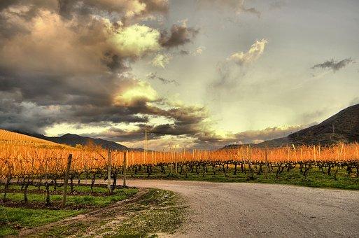 大家知道哪些加拿大葡萄酒是比较好的呢?