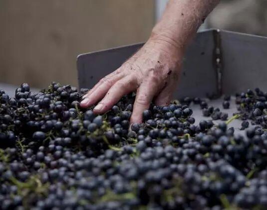 澳洲歌浓酒庄1865年老藤设拉子荣获世界葡萄酒大赛最高奖项