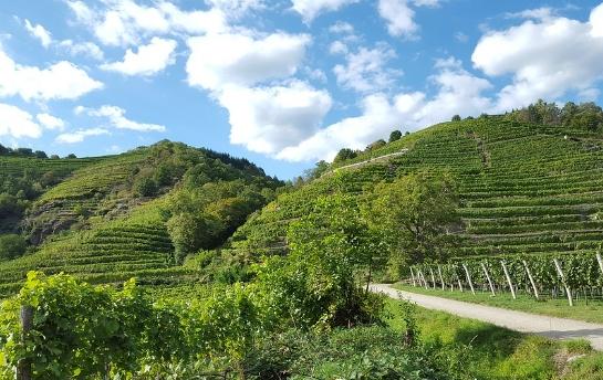 关于新西兰的葡萄酒小知识