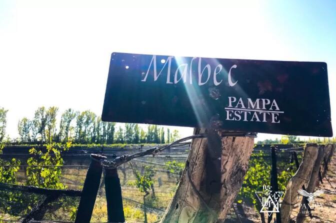 """牵手流量明星、中国超跑赛事:阿根廷PAMPA潘帕斯再添""""新丁"""""""