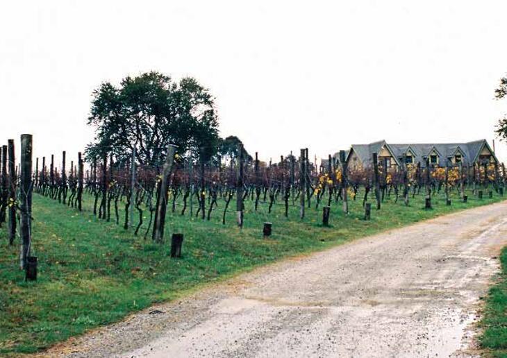 卡利酒庄有机栽培,来自南澳的独特之风