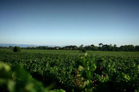 维克多酒庄 |  市场调整新机遇,南法产区深度剖析