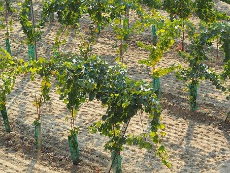 带各位去西班牙葡萄酒产区的纳瓦拉详细了解一番吧!