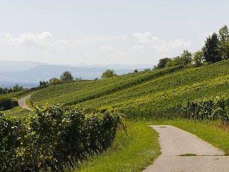对于意大利的著名葡萄品种科蒂丝,大家是否了解过没呢?