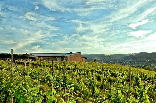 有谁是比较熟悉西班牙的普利奥拉托葡萄酒产区的呢?