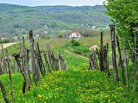 对于意大利的西西里岛和撒丁岛葡萄酒产区,大家对于其知识了解多少?
