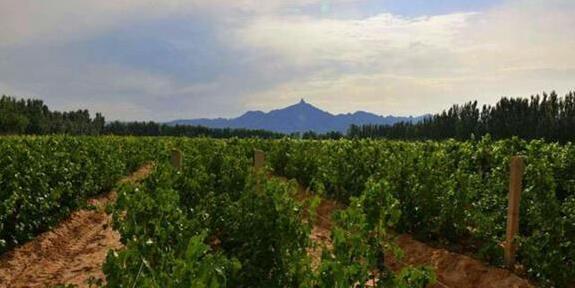 第三届世界沙漠葡萄酒节将在9月中旬举办