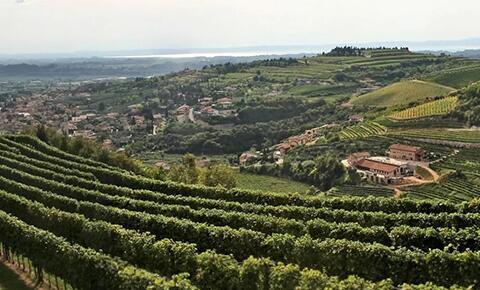 意大利瓦波利切拉地区未来三年内不允许再开发新葡萄园
