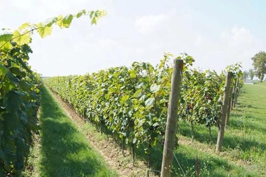 IWSR发布《全球葡萄酒发展趋势报告》