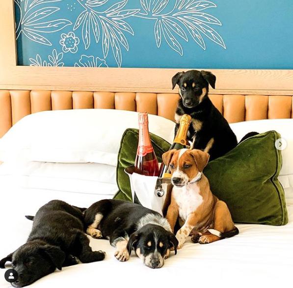 美国酒店提供小狗形状的普罗塞克葡萄酒服务