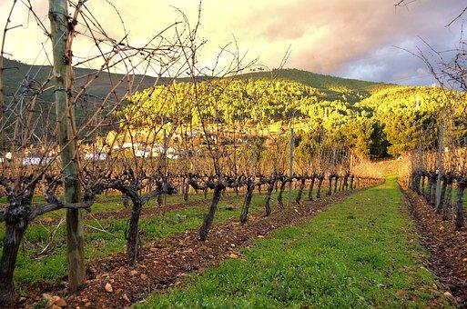 关于加拿大的葡萄酒之乡:奥肯纳根,大家是有没有去过那里了解过呢?