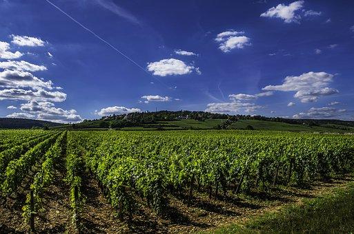 贺兰山葡萄酒产区:适合葡萄生长的土地