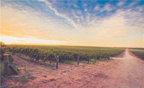 来自南澳大利亚知名的阿德莱德地区——酒满酒庄