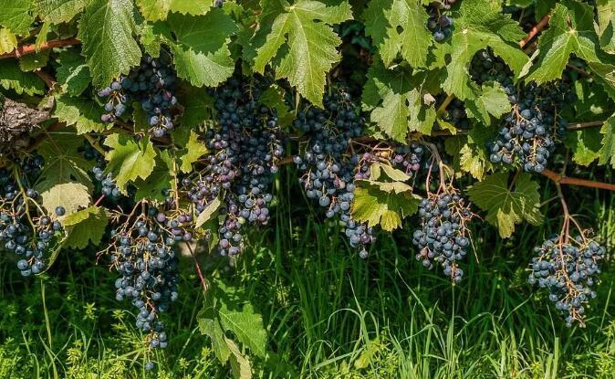 南罗纳河谷的卧虎藏龙,这里的酒值得赞叹!