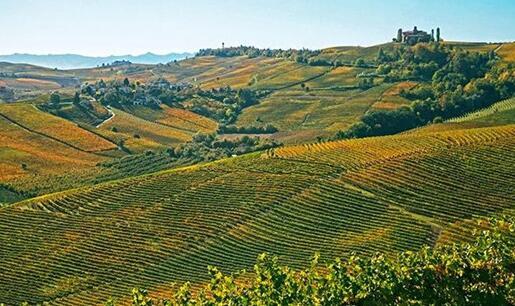 2019年意大利皮埃蒙特大区葡萄酒产量达到3.46亿升