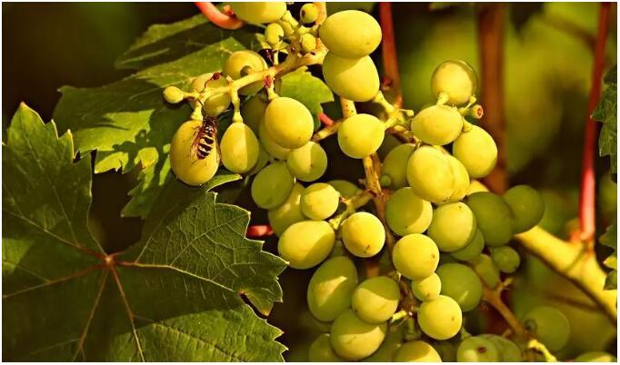 再不知道有机生态葡萄酒,Begins(毕嘎卢斯Joven干红)