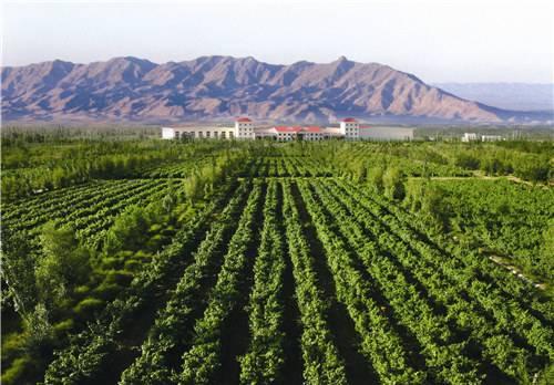 贺兰山东麓国际葡萄酒博览会升格为中国(宁夏)国际葡萄酒博览会