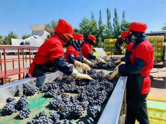 首创沙漠葡萄酒品类,小产区如何做大市场?