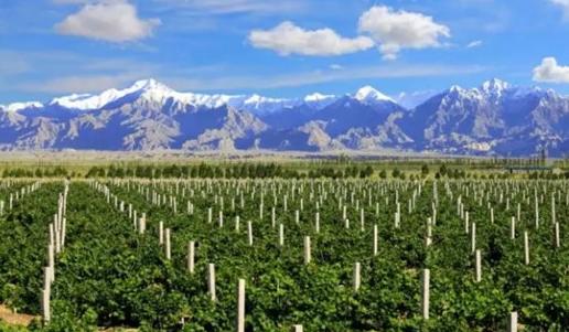 """焉耆葡萄酒产区是""""最具潜力的中国葡萄酒产区""""之一"""