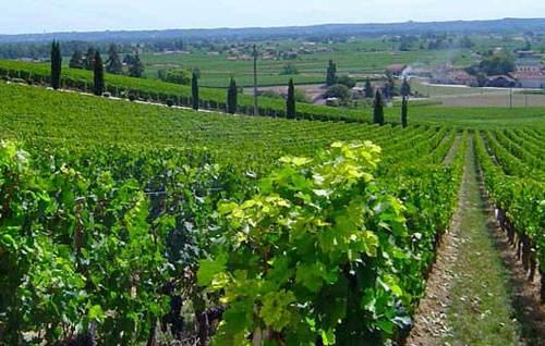 法国葡萄酒减产,对中国进口影响不大