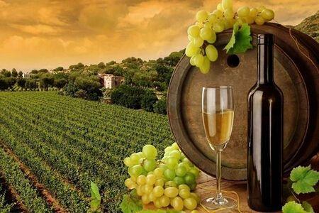 通过葡萄酒年份能看出什么信息呢?