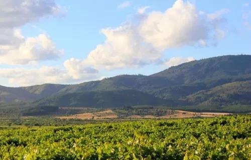 台山恒之酒业—为你优选最好的智利佳酿 |11.9-11 Interwine