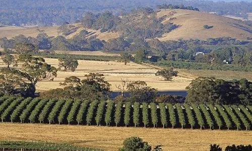 11.9-11 Interwine | APEC澳洲唯一酒庄合作伙伴—澳大利亚富伦谷酒庄