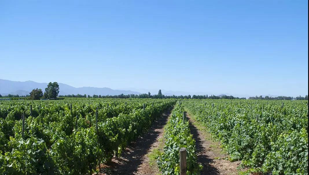 11.9-11 Interwine | 华宇酒业—带给消费者最多样的智利葡萄酒