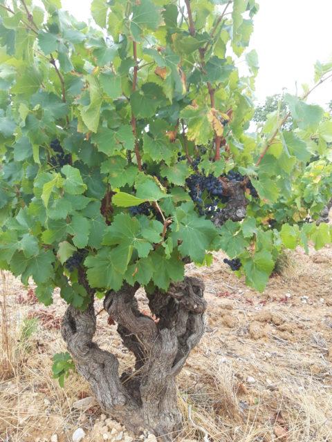 法国加百利美福酒庄收购位于卡拉纳产区的葡萄园