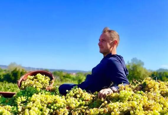 揭秘 | 葡萄酒是如何釀造而成?帶你參觀酒莊采收釀造前線