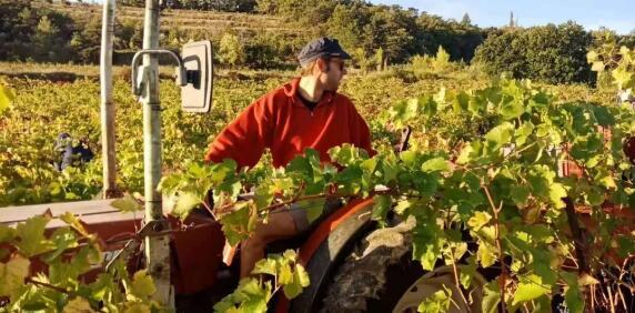 揭秘 | 葡萄酒是如何酿造而成?带你参观酒庄采收酿造前线