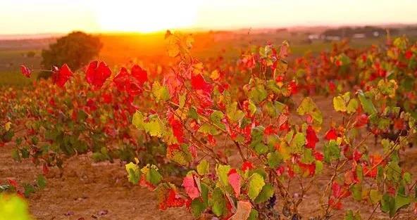 展团更新!53个葡萄酒产国,1000+全球参展商11月9-11日 Interwine 荣耀而来,蓄势待发
