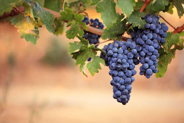 热葡萄酒可以防止流行感冒吗?