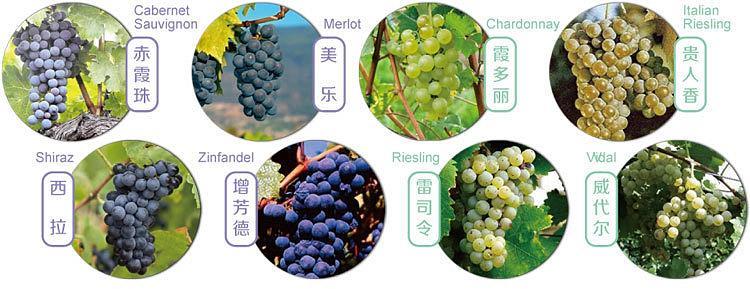 关于葡萄酒的适饮期大家了解多少?