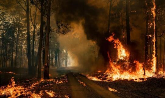 澳洲大火没有直接破坏当地葡萄园和酒庄
