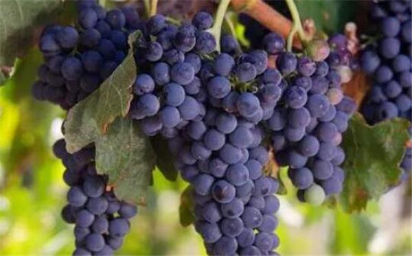 STOBl•斯多比红酒座客深圳电台先锋,探讨葡萄酒行业未来的发展趋势