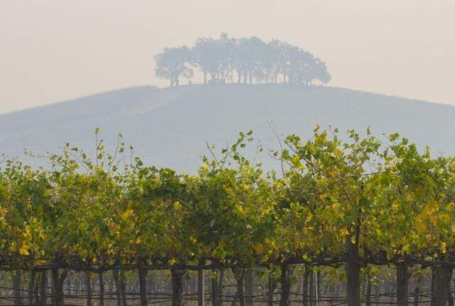 美国两家葡萄酒公司因葡萄园遭受烟雾污染申请索赔