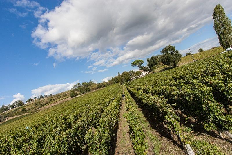 巴兰庄园(Chateau Lagrave Paran )以优良品质为主导的酒庄-杰恩酒业代理招商